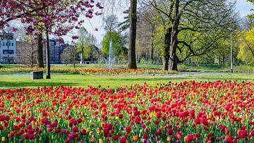 Breda - Wilhelminapark von I Love Breda