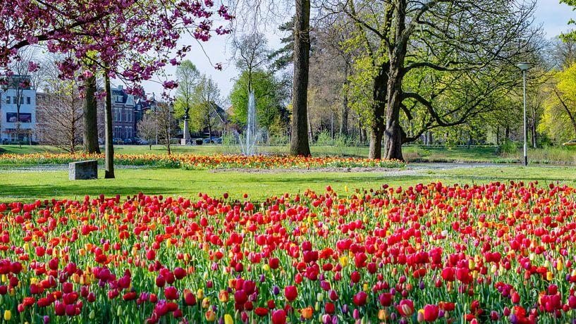 Breda - Wilhelminapark van I Love Breda