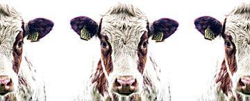 3 nieuwsgierige koeien op een rij!
