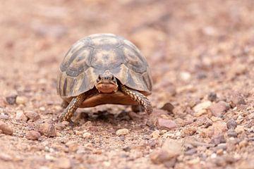Schildkröte von Dennis Eckert