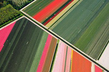 Diagonale lijn tussen de bloembollen in Noord-Holland van Robert Riewald