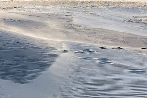 De schoonheid van de duinen van