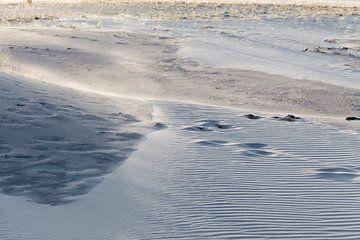 De schoonheid van de duinen van Willy Sybesma