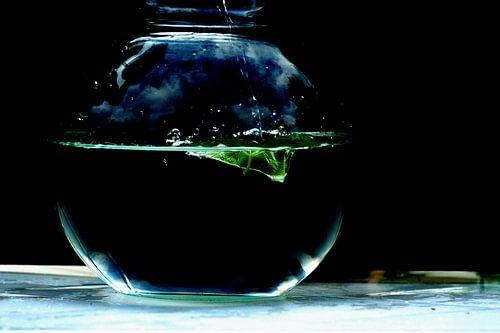 Drijvend blad of zinkt het?