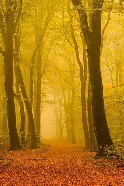 Bospad in de herfst van Sjoerd van der Wal