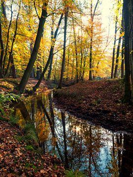 Herfstkleuren in het bos van Louis Kreuk