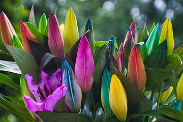 Kleurrijke rainbow lelies van JM de Jong-Jansen