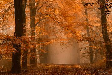 Herbstlaub und Nebel von Lars van de Goor
