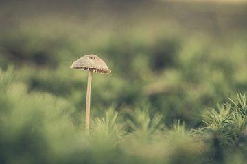 Pilz von Hans Lunenburg