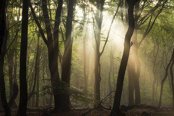 Am frühen Morgen leuchtet von Fabrizio Micciche