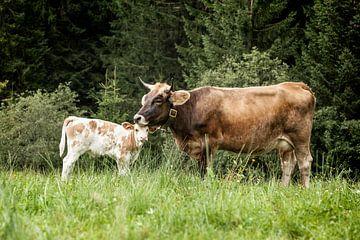 Mit Mutti von kuh-bilder.de