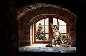 arched-window-kittens van H.m. Soetens