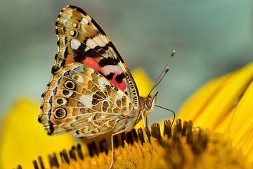 Ein kleiner Schmetterling auf einer gelben Blüte von Ulrike Leone