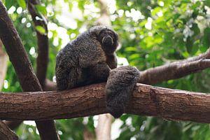 Monkey in tree von Menno van der Werf