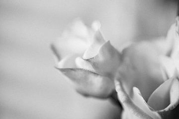 zarte Blume von patricia van den bogaart
