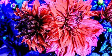 Rote Dahlien auf blauem Hintergrund von Patricia Piotrak