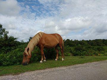 Wilde paarden op de camping van Wilbert Van Veldhuizen
