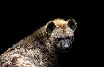 Hyena Portret van Karin vd Waal