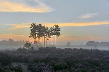 Sonnenaufgang auf der violetten Heide von Ad Jekel