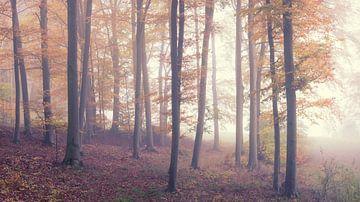 Geheimnisvoller Nebel im Wald von Tobias Luxberg
