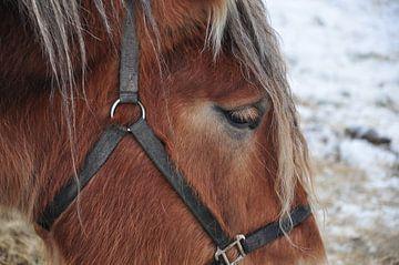 Paard in rust / Resting horse van Henk de Boer