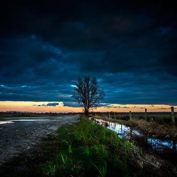 Een enkele boom van Ruud Peters