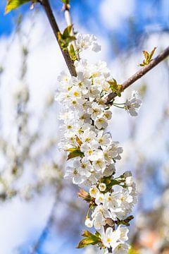 Blüte von zeilstrafotografie.nl