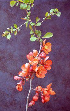 Blütenzauber van Augenblicke im Bild