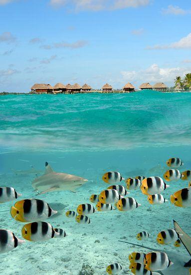 Le requin et des poissons papillons corail à Bora Bora