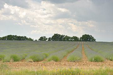 Provence lavendel van