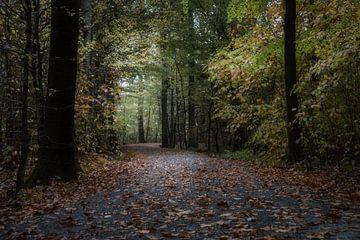 der Herbstwald von Koen Ceusters