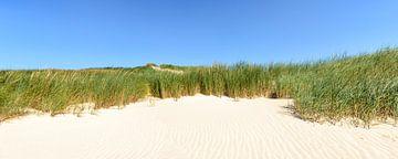 Duingras op het strand op een zomerse dag van Sjoerd van der Wal