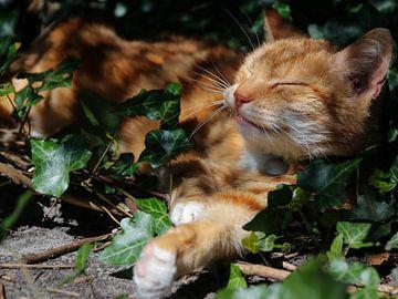 Schlafende Katze von Petra van der Werff