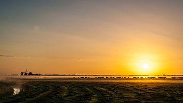 De koeien gaan naar buiten van Sparkle King