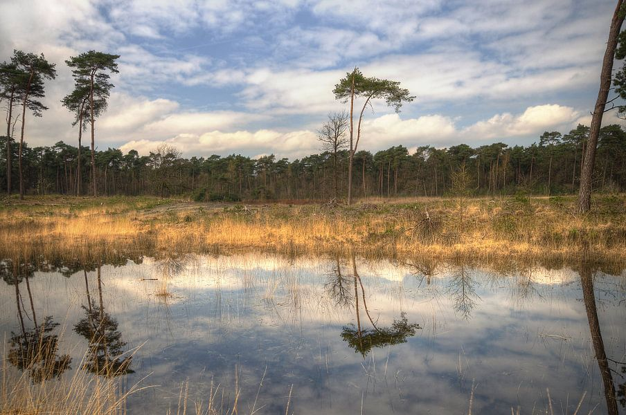 Landschap - Reflect