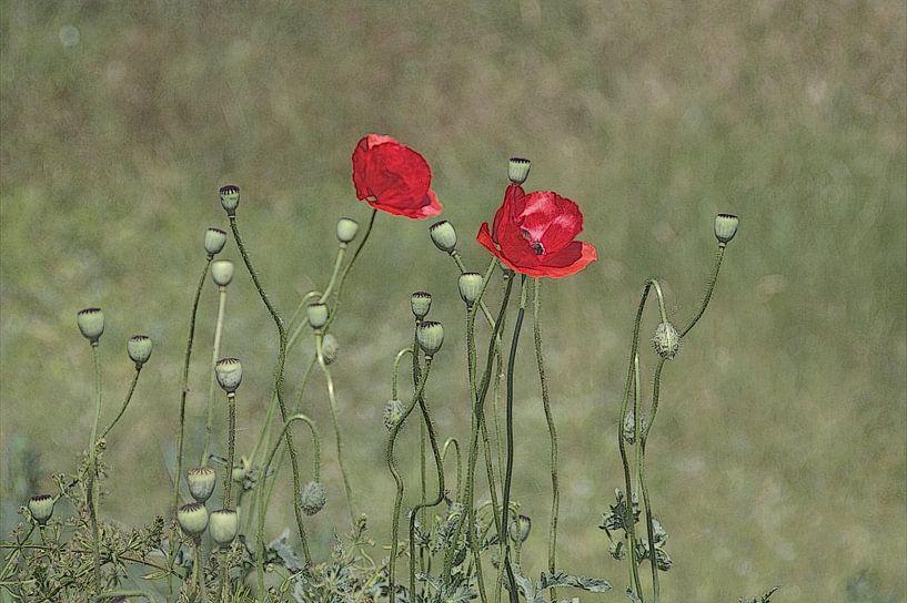 poppy&poppy van marleen brauers