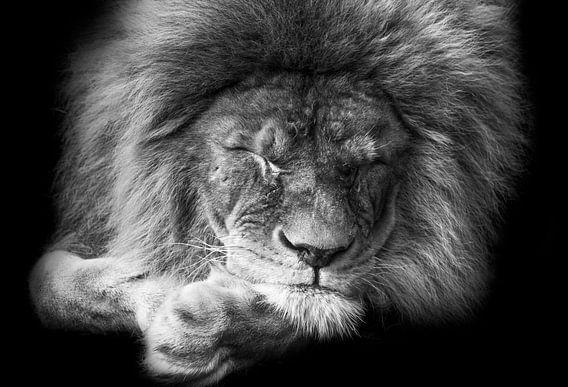 Zwart-wit portret slapende leeuw van Michar Peppenster