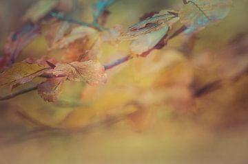 Herbstliche Farben mehrfach hell von Kitty Stevens