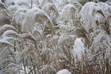 Grassen in de sneeuw van Berthold Werner