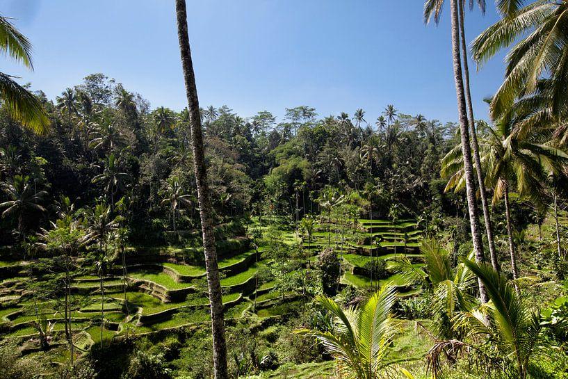 Rijst terrassen in de omgeving van Ubud. van Tjeerd Kruse