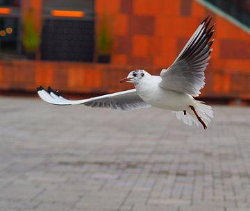 Vogelvlucht van Daan van Gils