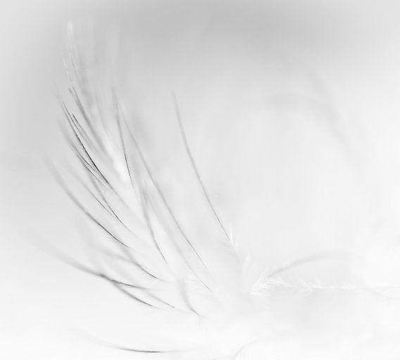 Feather in black and white van Greetje van Son