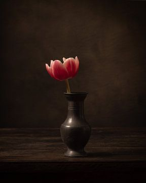 Einzelblume von Alexander Tromp