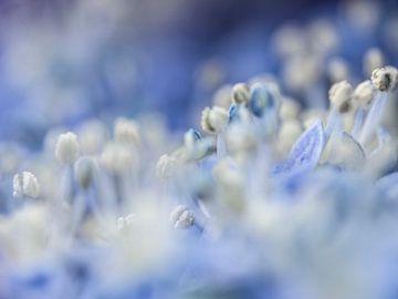 In het blauwe veld verdwaald von Henk Goossens