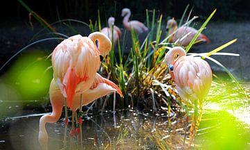 Flamingos von Eric Sweijen