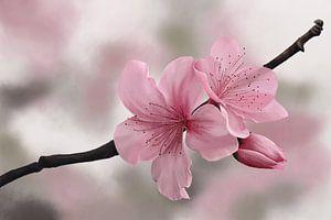 Japanse Kersenbloesems van