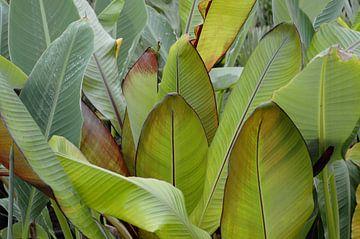 Planten 1 van Miriam Duda