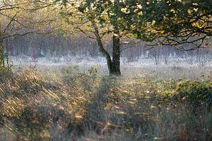 Ochtendsfeer in de vroege herfst
