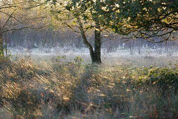 Ochtendsfeer in de vroege herfst von Hans Koster