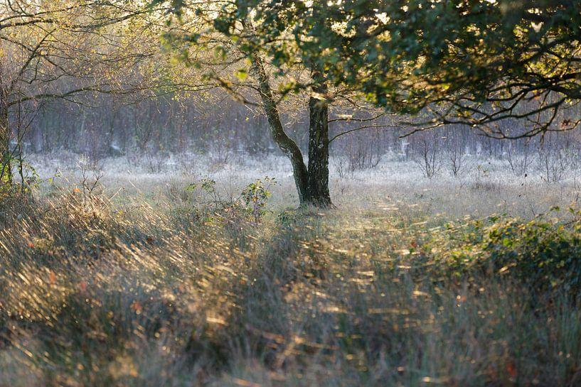 Ochtendsfeer in de vroege herfst van Hans Koster